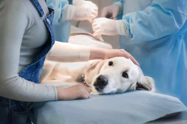 Tier-OP-Versicherung für Hunde und Katzen - AdobeStock 106825488