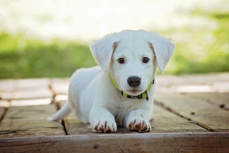 Was bei der Auswahl einer Hundehaftpflichtversicherung beachtet werden muss - puppy 1903313 1920